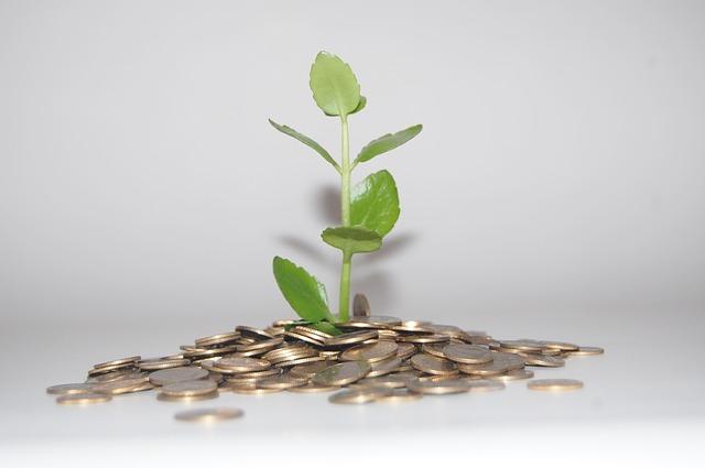 geldmünzen-haufen-pflanze-wachstum